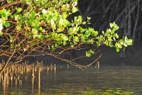 3 mangroves-in-the-lamu-area-indian-ocean-coast-of-kenya_b2da