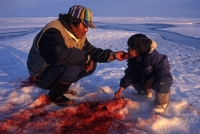 inuit-hunter-feeds-his-child-with-still-warm-meat-from-just-hunted-ring-seal-pond-inlet-canada_3571-800x515px-1_200_134_cropp